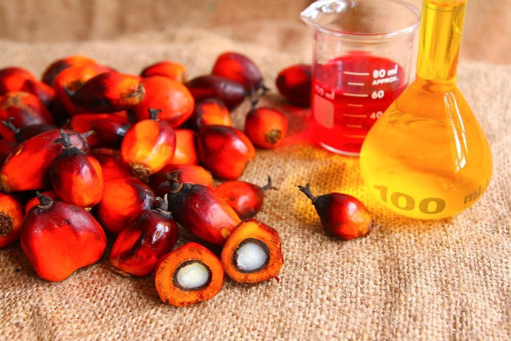 olio palma fa bene alla salute