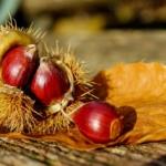 Le Castagne e Benefici nutrizionali