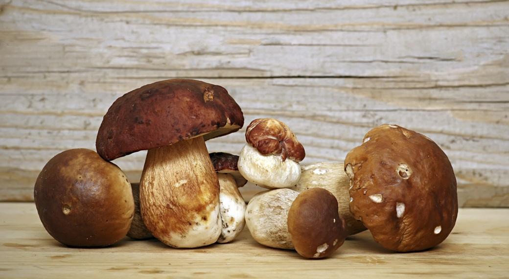 funghi per le difese immunitarie
